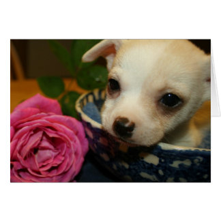 Cartão O filhote de cachorro da chihuahua do bebê do