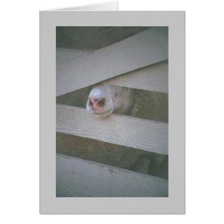 Cartão o focinho do carneiro através da cerca