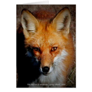 Cartão O Fox vermelho de Arkansas