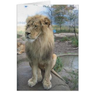 Cartão O leão procura o almoço