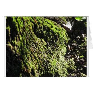 Cartão O musgo verde no detalhe da natureza de musgo