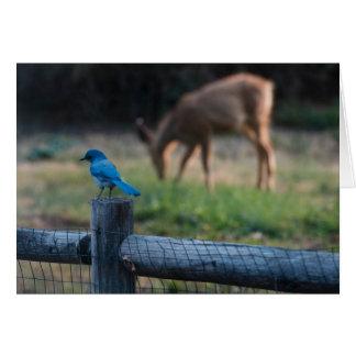 Cartão O pássaro e os cervos obtêm avante apesar de suas