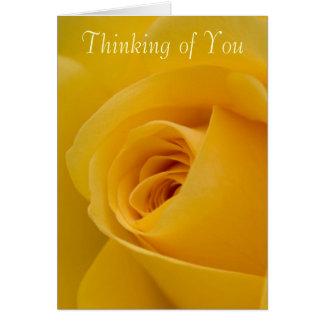 Cartão O pensamento de você carda - a flor do rosa