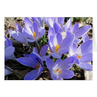 Cartão O primavera está estourando, açafrão & árvore de