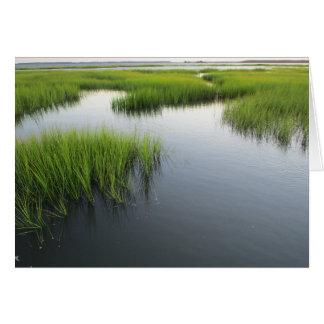 Cartão O quintal de Beaufort