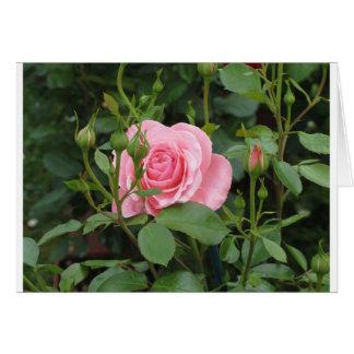 Cartão O rosa do rosa floresce com gotas de água no