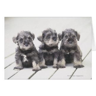 Cartão O Schnauzer diminuto é uma raça do cão pequeno