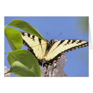 Cartão O tigre oriental Swallowtail toma o vôo