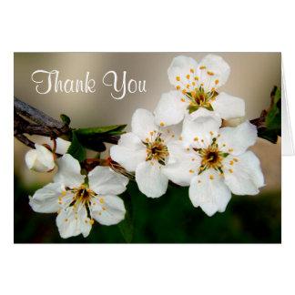 Cartão Obrigado branco das flores da flor de cerejeira