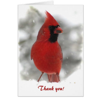 Cartão Obrigado cardinal você