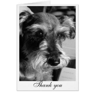 Cartão Obrigado (Charmin)