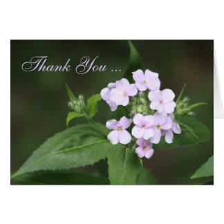 Cartão Obrigado da flor do Phlox você no malva