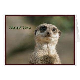 Cartão Obrigado de Meerkat você Notecard