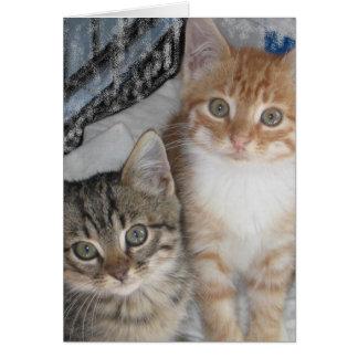 Cartão Obrigado gatinhos