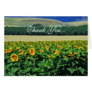 Cartão Obrigado… girassóis