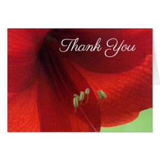 Cartão Obrigado vermelho da flor do Amaryllis você notas