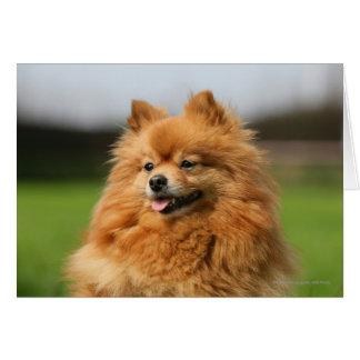 Cartão Observação de Pomeranian