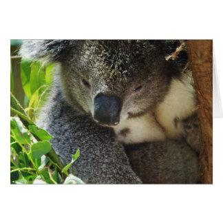 Cartão ocasional do Koala