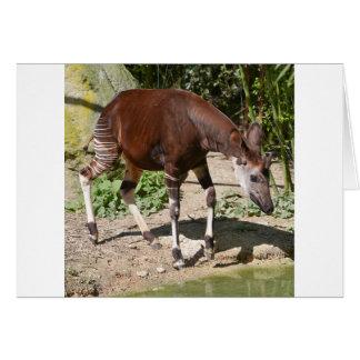 Cartão Okapi (johnstoni do Okapia) perto da lagoa entre o