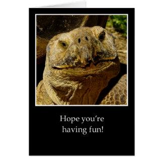 Cartão Olá! à tartaruga de sorriso do campista