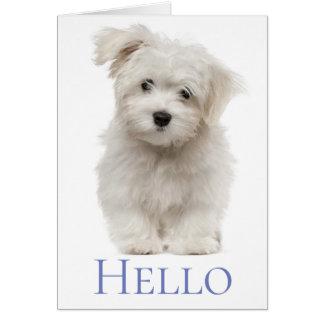 Cartão Olá! cão de filhote de cachorro maltês branco que