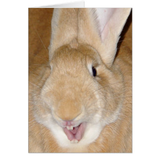 Cartão Olá! coelho