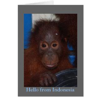Cartão Olá! da foto do orangotango de Indonésia