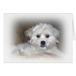 Cartão Olá! lá!  Filhote de cachorro desvanecido de Shih