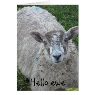 Cartão Olá! ovelha