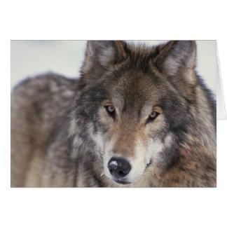 Cartão Olhar do lobo