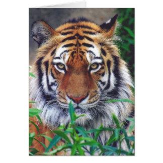 Cartão Olhar fixo do tigre