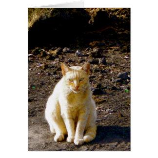 Cartão Olho mal-humorado do fedor do gato