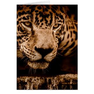 Cartão olhos de desengaço da água do jaguar