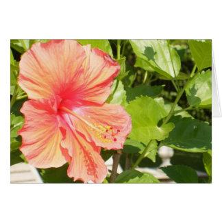 Cartão Onde as flores florescem assim que espera