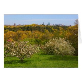 Cartão Opinião do arboreto de Arnold a Boston do monte de