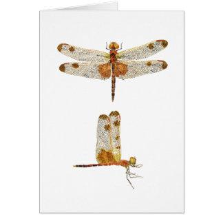 Cartão Opiniões masculinas da libélula 2 da flâmula da