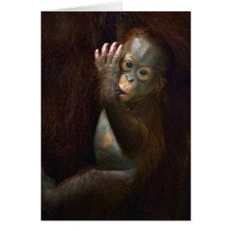 Cartão Orangotango