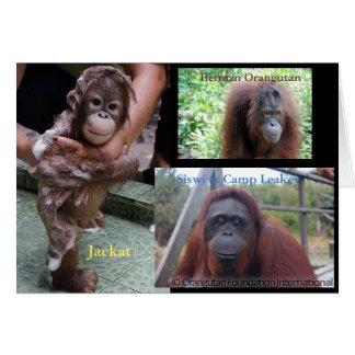 Cartão Orangotango Bornéu, colocação de Tanjung