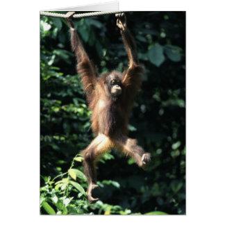 Cartão Orangotango em Bornéu