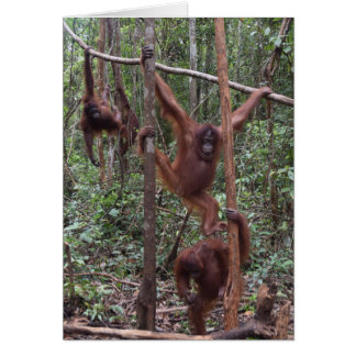Cartão Orangotango fêmeas na selva de Bornéu