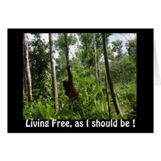 Cartão Orangotango livres vivos na selva de Bornéu