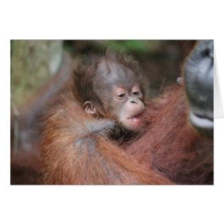 Cartão Orangotango novo do bebê, filho de Akmad
