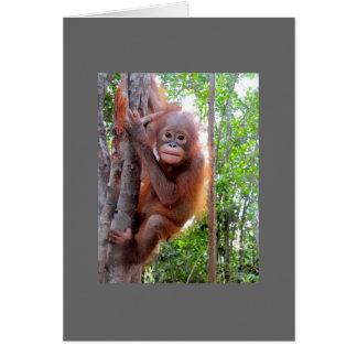Cartão Orangotango salvado Uttuh do bebê
