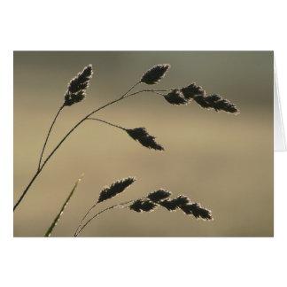 Cartão Orelha molhada da grama
