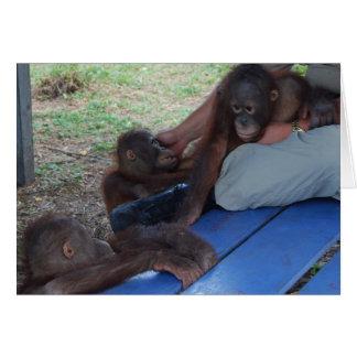 Cartão Órfão do bebê do orangotango