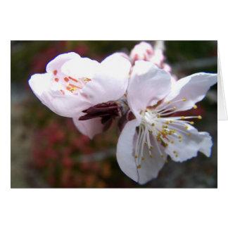 Cartão oriental da flor do pêssego