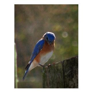 Cartão oriental do Bluebird