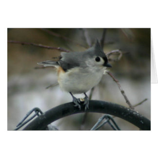 Cartão Ornitologia
