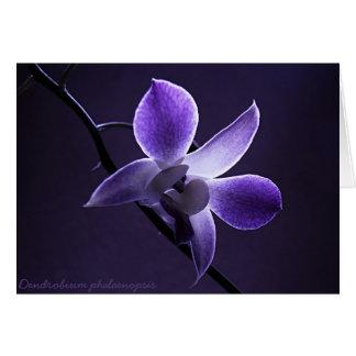 Cartão Orquídea azul