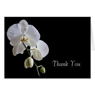 Cartão Orquídea branca no obrigado preto você